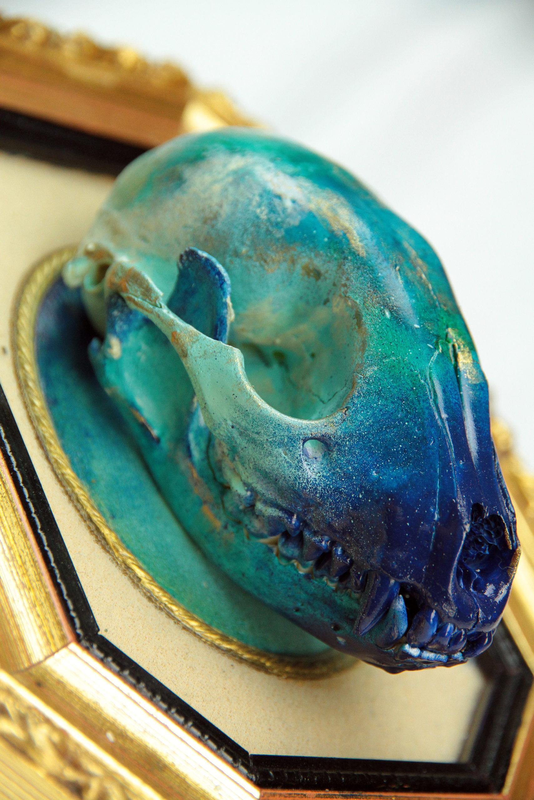 Miss Vitriol - Custom sur Crâne de Raton Laveur